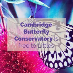Cambridge Butterfly Conservatory Activity Idea
